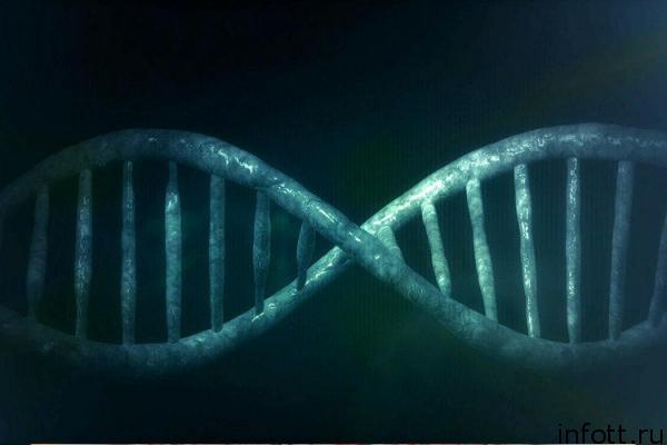 Получены дрожжи с искусственными хромосомами