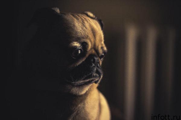 Хороший, плохой, злой: негативные эмоции полезны для психики